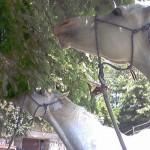 cavalgiocare 2